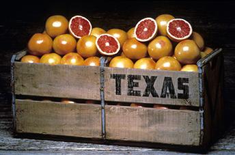 Texas+Grapefruit Texas Grapefruit 50¢ each